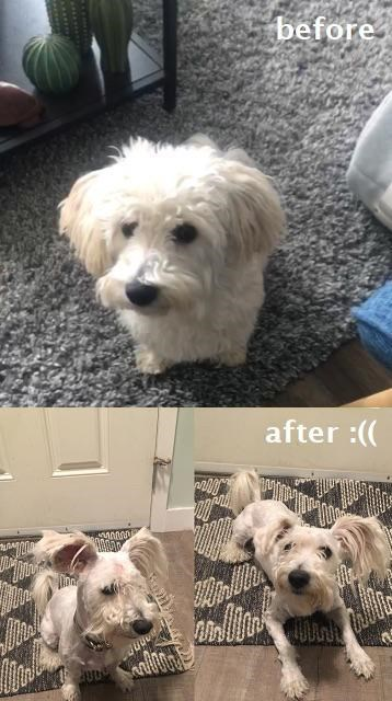 Dog - before after :((