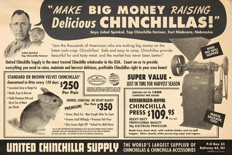 """Newspaper - ee """"MAKE BIG MONEY RAISING Delicious CHINCHILLAS!"""" 99 Says Jubal Spinkel, Top Chinchilla Farmer, Fort Niobrara, Nebraska """"Join the thousands of Americans who are making big money on the latest cash-crop: Chinchillas! Safe and easy to raise, Chinchillas provide Top Chinchilla Farmer beautiful fur and tasty meat, and the market has never been better!"""" WIDE NO-SPILL HOPPER Jubal Spinkel United Chinchilla Supply is the most trusted Chinchilla wholesaler in the USA. Count on us to provide"""