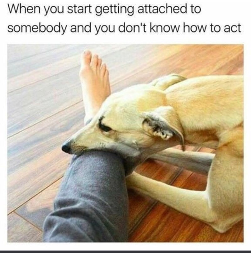 Canidae - When you start getting attached to somebody and you don't know how to act
