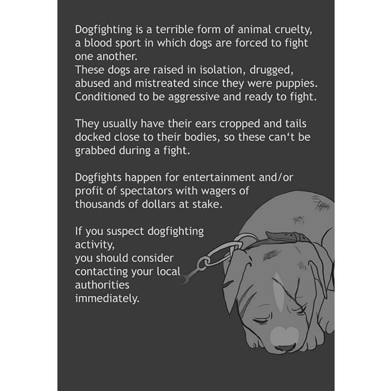 Text - Dogfighting is a terrible form of animal cruelty, a blood sport in which dogs are forced to fight one another. These dogs are raised in isolation, drugged, abused and mistreated since they were puppies. Conditioned to be aggressive and ready to fight. They usually have their ears cropped and tails docked close to their bodies, so these can't be grabbed during a fight. Dogfights happen for entertainment and/or profit of spectators with wagers of thousands of dollars at stake. If you suspec
