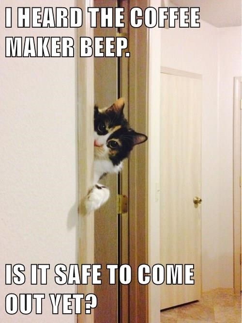 Door - I HEARD THE COFFEE MAKER BEEP. IS IT SAFE TO COME OUT VET?