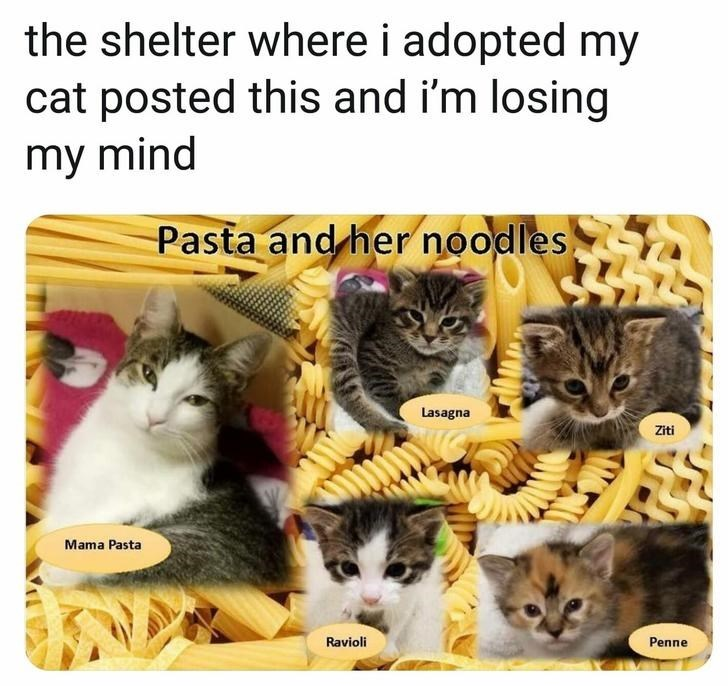 cat meme the shelter where i adopted my cat posted this and i'm losing my mind Pasta a Lasagna Mama pasta Penne ravioli ziti