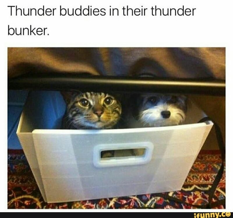 Photo caption - Thunder buddies in their thunder bunker. ifunny.co