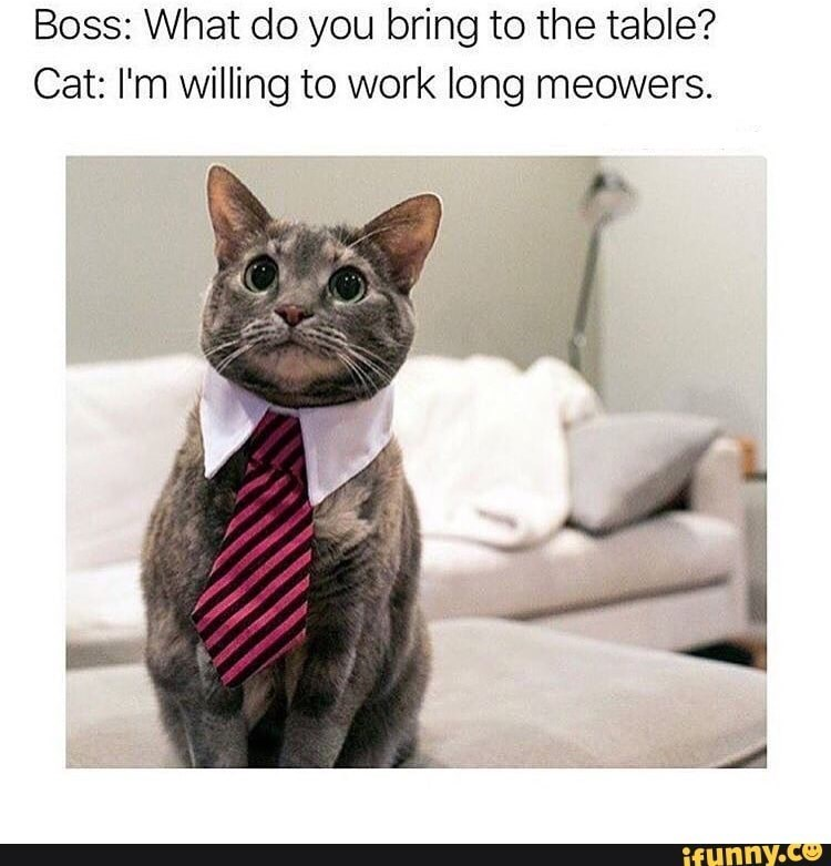 Cat - Boss: What do you bring to the table? Cat: I'm willing to work long meowers. ifunny.co