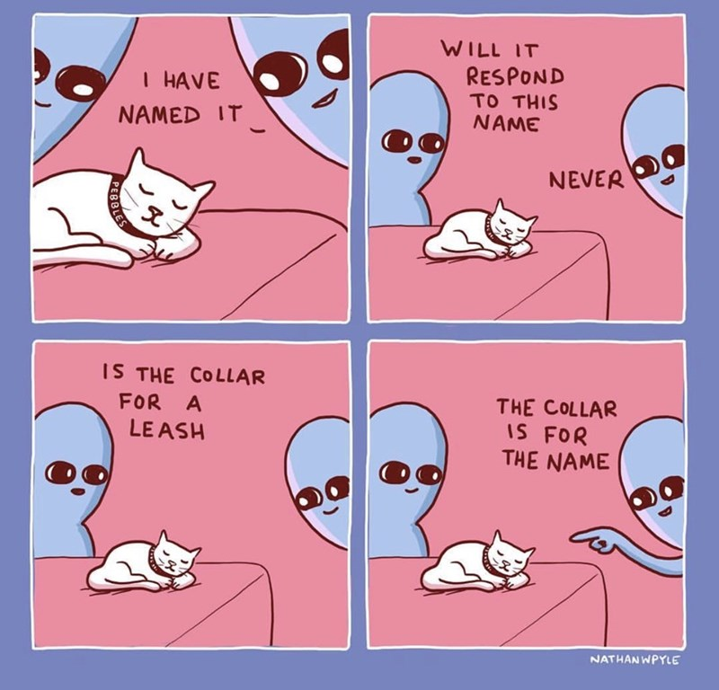 Text - WILL IT RESPOND TO THIS NAME I HAVE NAMED IT NEVER IS THE COLLAR THE COLLAR IS FOR THE NAME FOR A LE ASH NATHAN WPYLE