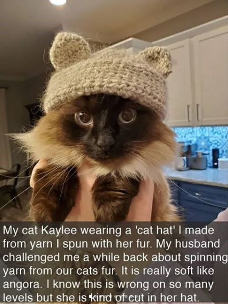 Photo caption - My cat Kaylee wearing a 'cat hat' I made from yarn I spun with her fur. My husband challenged me a while back about spinning yarn from our cats fur. It is really soft like angora. I know this is wrong on so many levels but she is kind of cut in her hat.