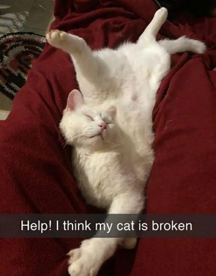 Cat - Help! I think my cat is broken