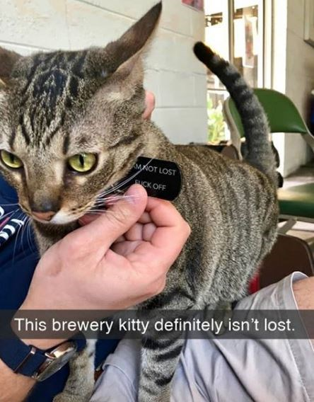 Cat - MKOT LOST SUCK OFF This brewery kitty definitely isn't lost.