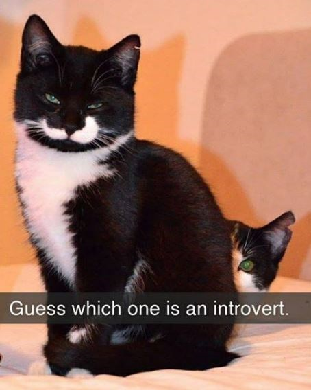 Cat - Guess which one is an introvert.