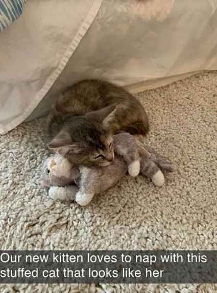 Cat - Our new kitten loves to nap with this stuffed cat that looks like her