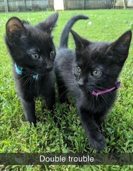 Cat - Double trouble