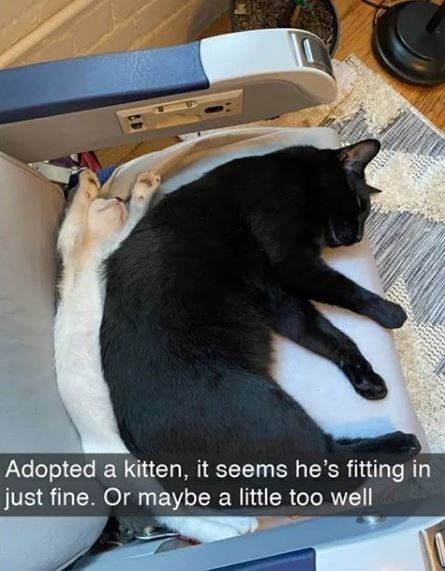 Cat - Adopted a kitten, it seems he's fitting in just fine. Or maybe a little too well