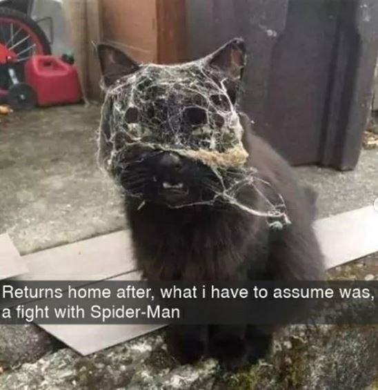 Cat - Returns home after, what i have to assume was, a fight with Spider-Man