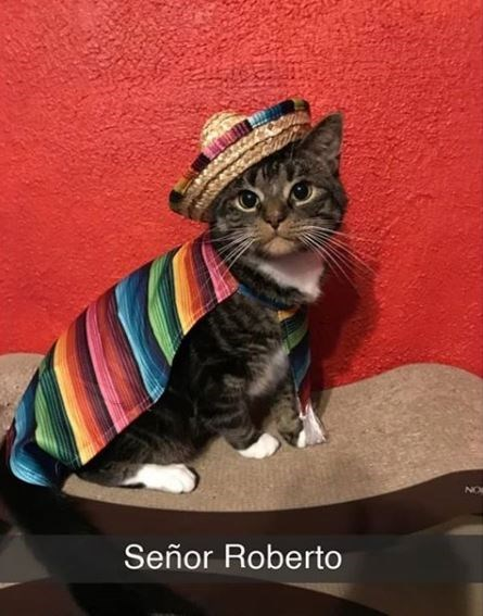 Cat - Señor Roberto