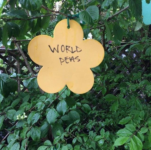 Leaf - WORLD PEAS
