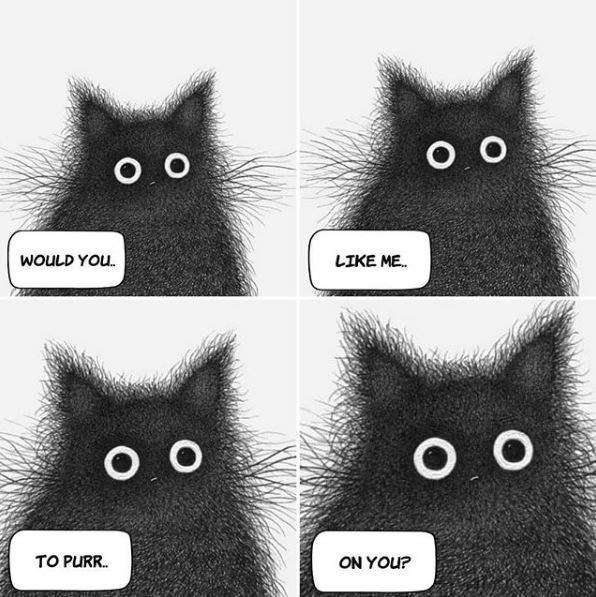 Cat - O O O O WOULD YOU. LIKE ME. O O O O TO PURR. ON YOU?