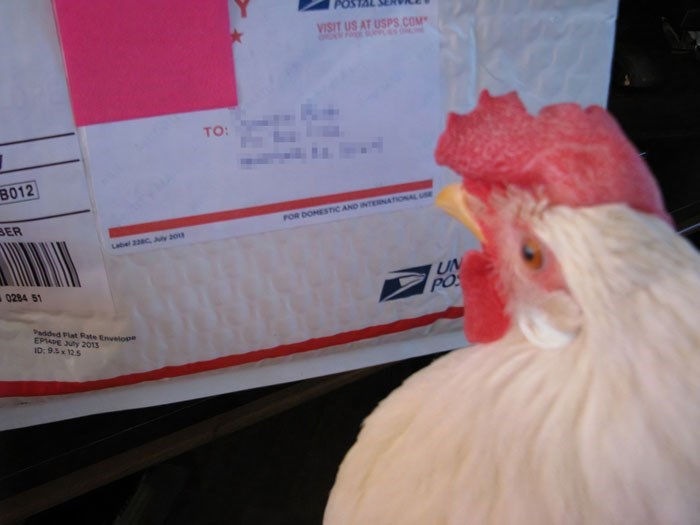 Chicken - VISIT US AT USPS.COM TO: В012 BER FOR DOMESTIC AND INTEONATIONAL UE Label 2c uy 20 UN PO 0284 51 Paddd Flat Rate Envetope EPE y 2013 ID:95x125