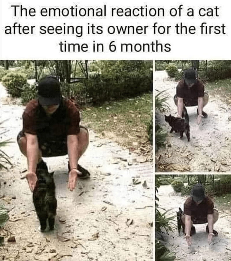 The emotional reaction of a cat after seeing its owner for the first time in 6 months cat ignoring and walking around a person reaching for it