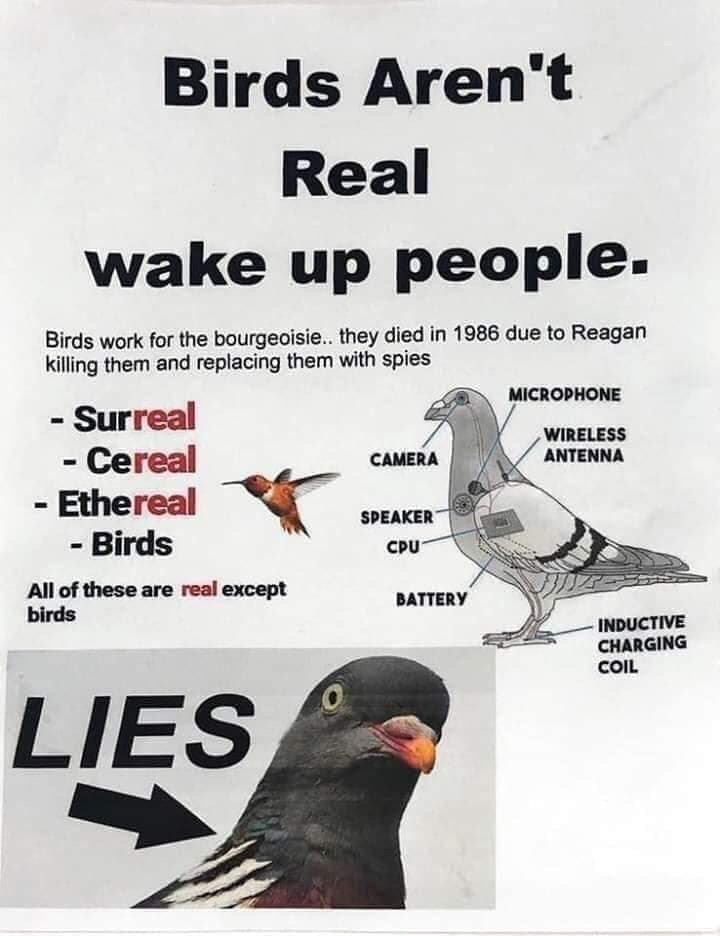 Bird - Birds Aren't Real wake up people. Birds work for the bourgeoisie.. they died in 1986 due to Reagan killing them and replacing them with spies MICROPHONE - Surreal - Cereal - Ethereal - Birds %3D WIRELESS ANTENNA CAMERA SPEAKER CPU All of these are real except birds BATTERY INDUCTIVE CHARGING COIL LIES