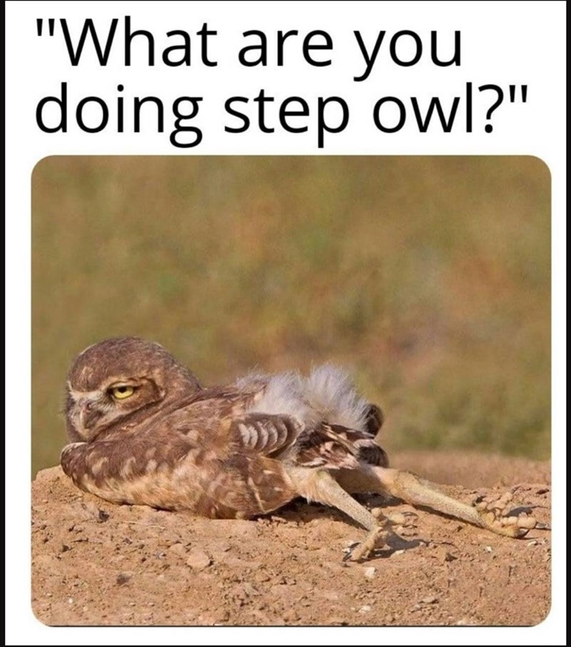 """Adaptation - """"What are you doing step owl?"""""""