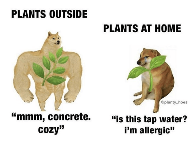 funny memes about plants, swole doge vs cheems | PLANTS OUTSIDE mmm, concrete. cozy PLANTS AT HOME is this tap water? i'm allergic