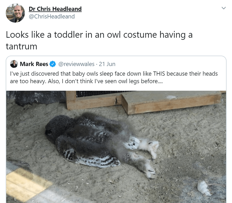 People Are Surprised To Discover Baby Owls Sleep With Their Faces Down I Can Has Cheezburger