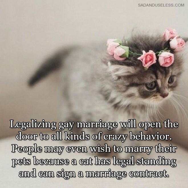 Cat - SADANDUSELESS.COM Legalizing gay marriage will open the door to all kinds of crazy behavior. People may even wish to marry their pets because a cat has legal standing and can sign a marriage contract.