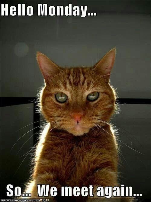 Text - Cat - Hello Monday. So. We meet again. TOANHASCHEE2BURGER.COM G