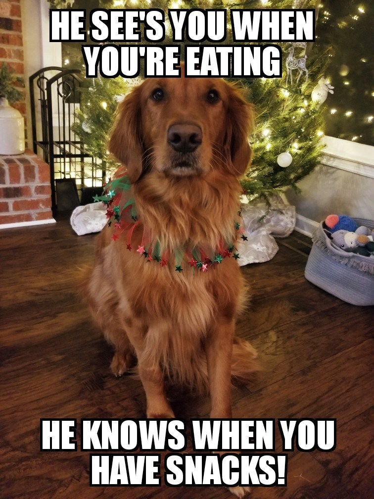 Dog - HE SEE'S YOU WHEN YOU'RE EATING HE KNOWS WHEN YOU HAVE SNACKS!