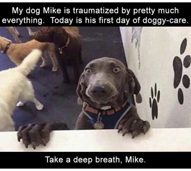 Dog - My dog Mike is traumatized by pretty much everything. Today is his first day of doggy-care. Take a deep breath, Mike.