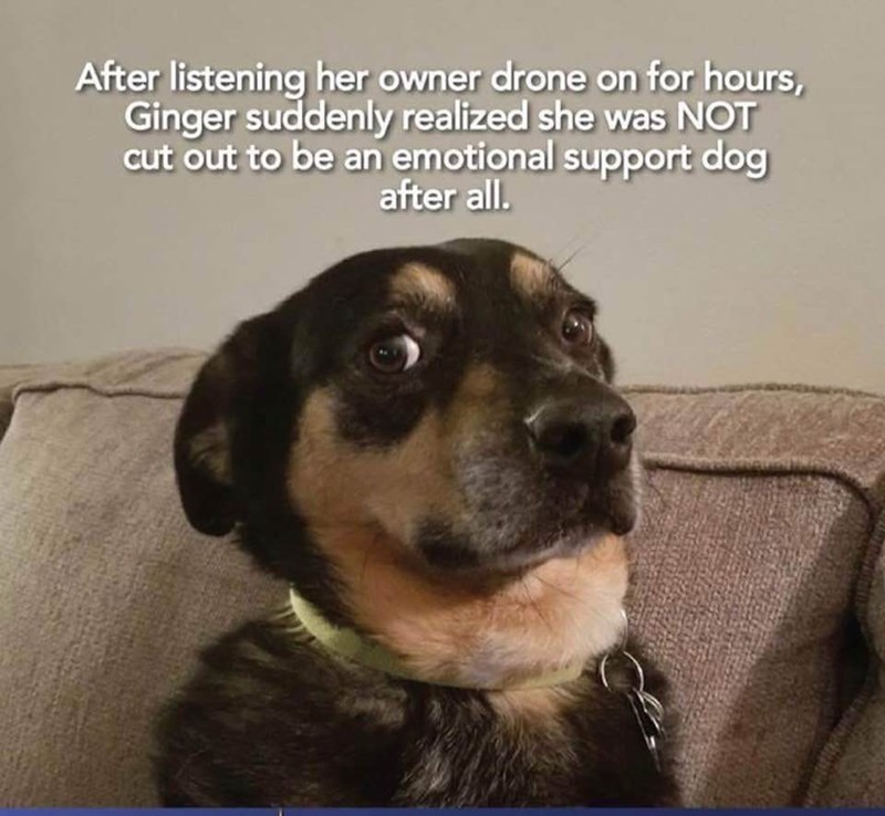Dog breed - After listening her owner drone on for hours, Ginger suddenly realized she was NOT cut out to be an emotional support dog after all.
