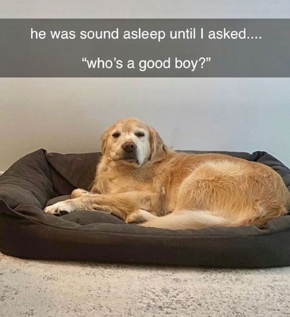 """Mammal - he was sound asleep until I asked.... """"who's a good boy?"""""""