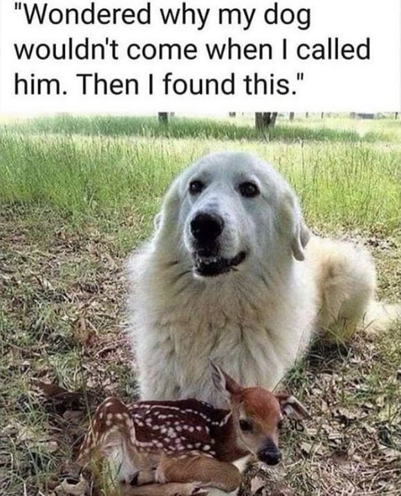 """Mammal - """"Wondered why my dog wouldn't come when I called him. Then I found this."""""""
