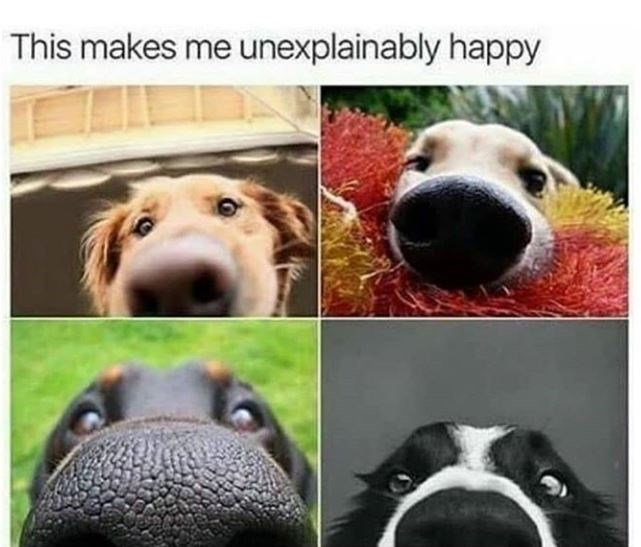 Nose - This makes me unexplainably happy