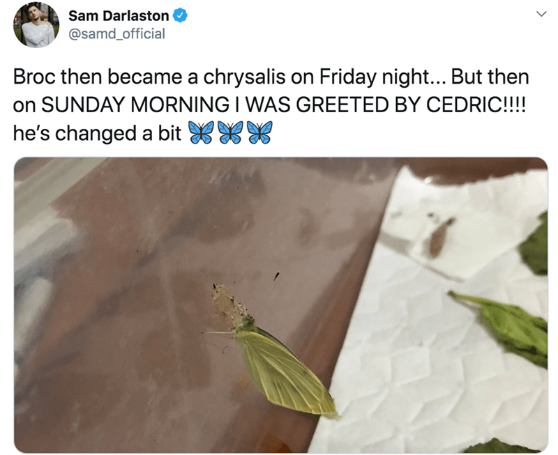 Organism - Sam Darlaston @samd_official Broc then became a chrysalis on Friday night... But then on SUNDAY MORNING I WAS GREETED BY CEDRIC!!!! he's changed a bit XX