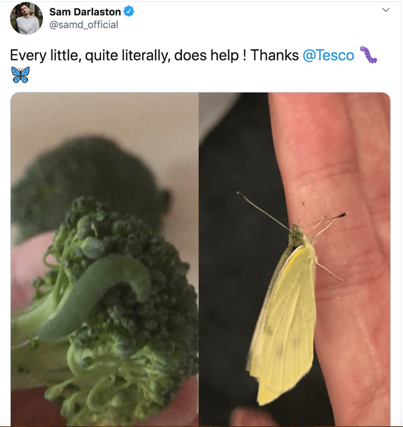 Insect - Sam Darlaston @samd_official Every little, quite literally, does help ! Thanks @Tesco