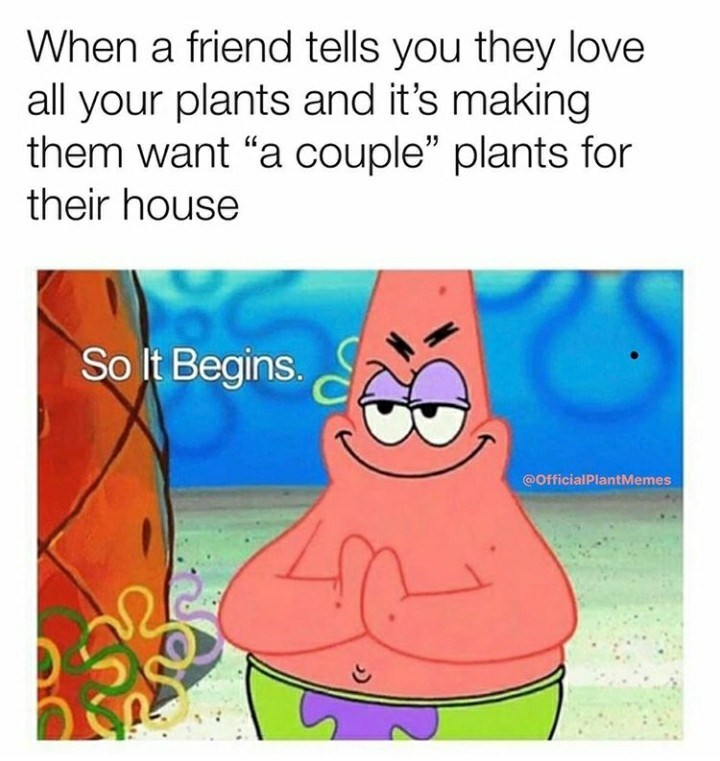 """Text - When a friend tells you they love all your plants and it's making them want """"a couple"""" plants for their house So It Begins. S @OfficialPlantMemes"""