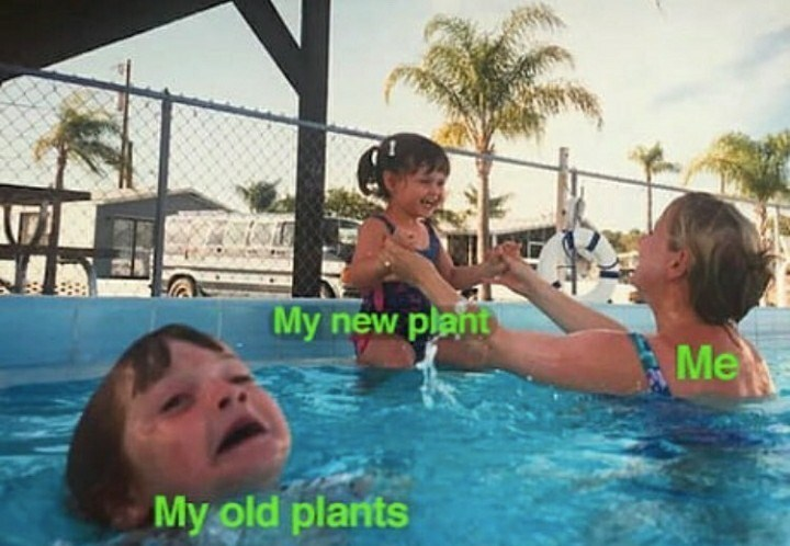 Swimming pool - My new plant Me My old planits