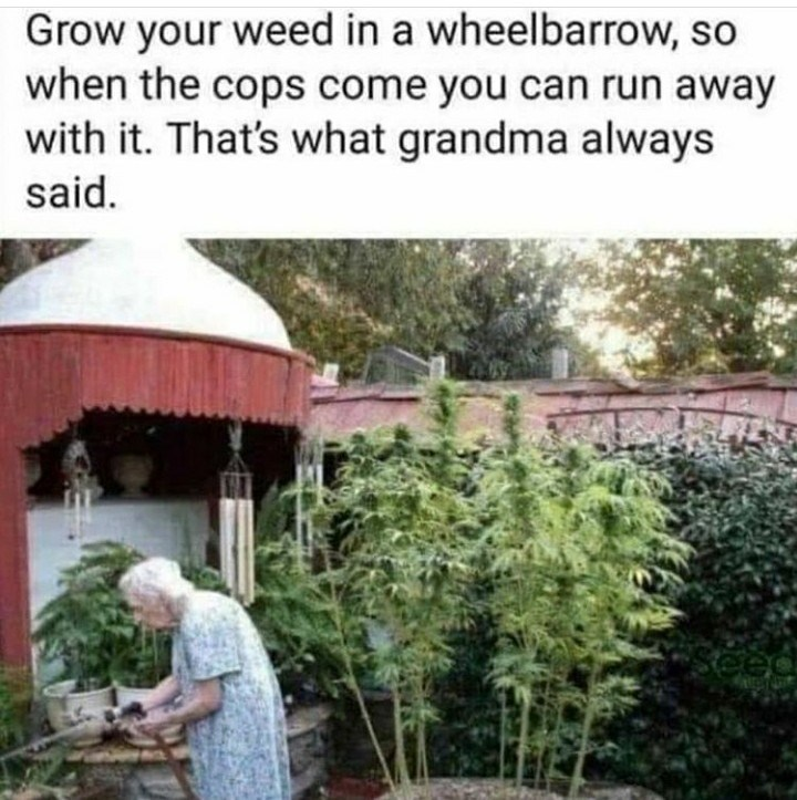 Adaptation - Grow your weed in a wheelbarrow, so when the cops come you can run away with it. That's what grandma always said.