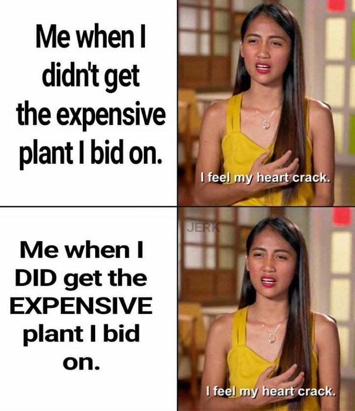 Text - Me when I didn't get the expensive plant I bid on. I feel my heart crack. JERK Me when I DID get the EXPENSIVE plant I bid on. I feel my heart crack.