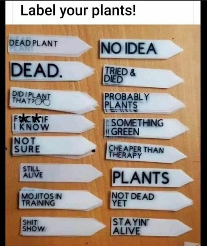 Text - Label your plants! DEAD PLANT NO IDEA DEAD. TRIED & DIED DIDI PLANT THAT OO PROBABLY PLANTS FcKIF I KNOW SOMETHING GREEN NOT SURE CHEAPER THAN THERAPY STILL ALIVE PLANTS MOJITOS IN TRAINING NOT DE AD YET SHIT SHOW STAYIN ALIVE