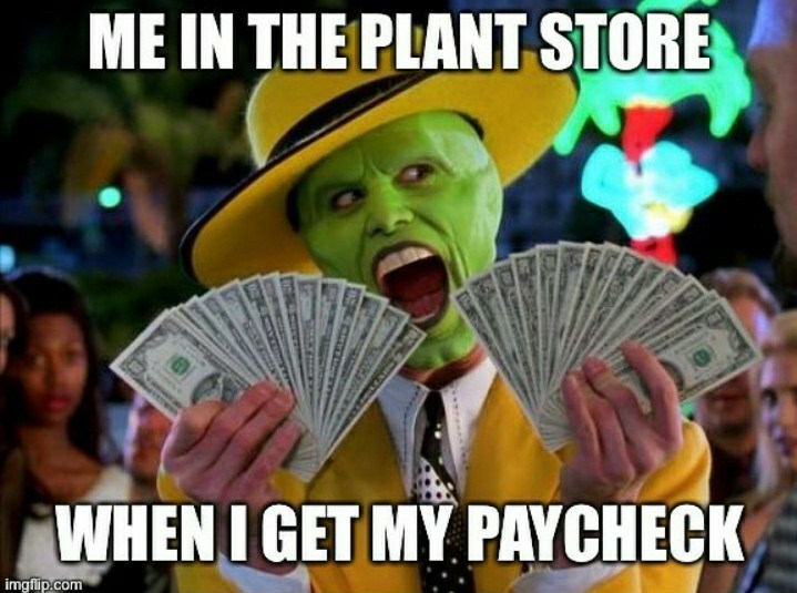 Photo caption - ME IN THE PLANT STORE WHEN I GET MY PAYCHECK imgflip.com