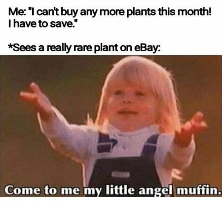 """Photo caption - Me: """"I can't buy any more plants this month! Ihave to save."""" *Sees a really rare plant on eBay: Come to me my little angel muffin."""