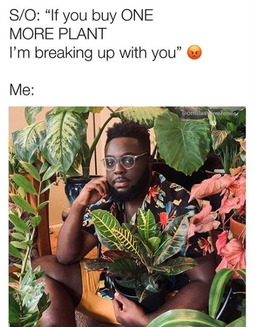 """Natural environment - S/O: """"If you buy ONE MORE PLANT I'm breaking up with you"""" Me: officialnMome"""