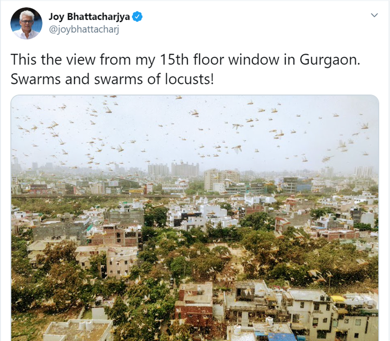 Text - Joy Bhattacharjya @joybhattacharj This the view from my 15th floor window in Gurgaon. Swarms and swarms of locusts! >