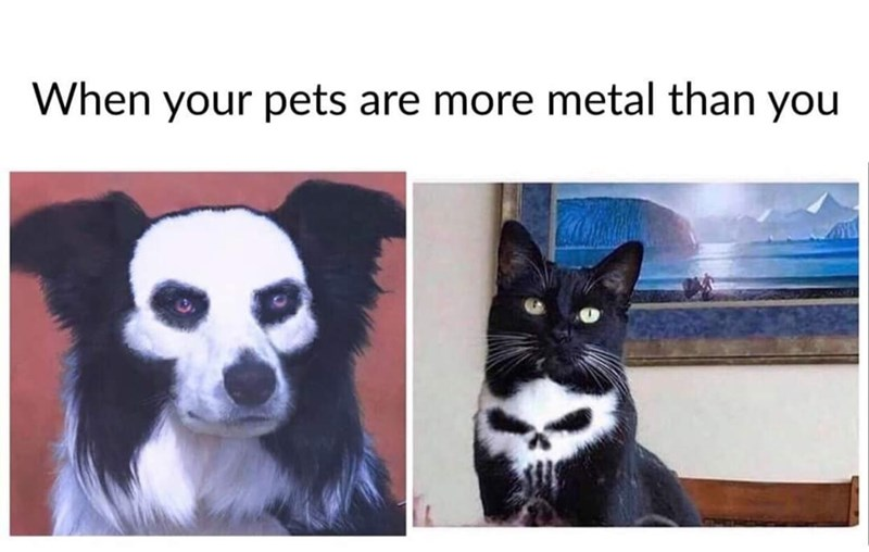 Head - When your pets are more metal than you