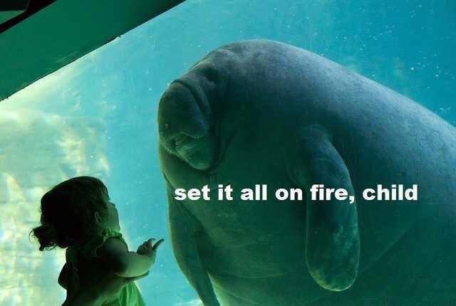 Marine mammal - set it all on fire, child