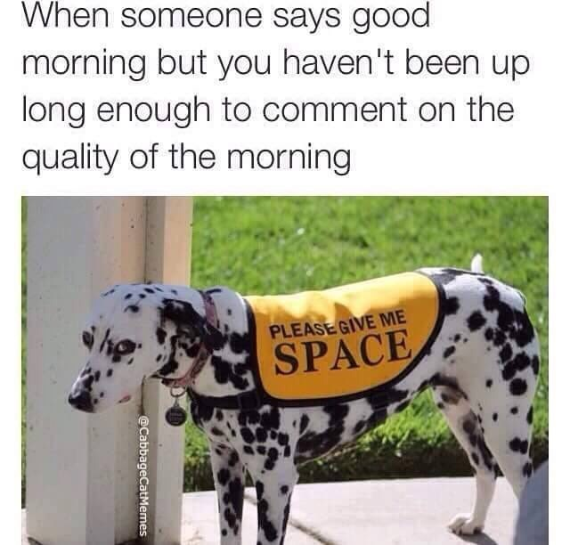Dalmatian - When someone says good morning but you haven't been up long enough to comment on the quality of the morning PLEASE GIVE ME SPACE @CabbageCatMemes