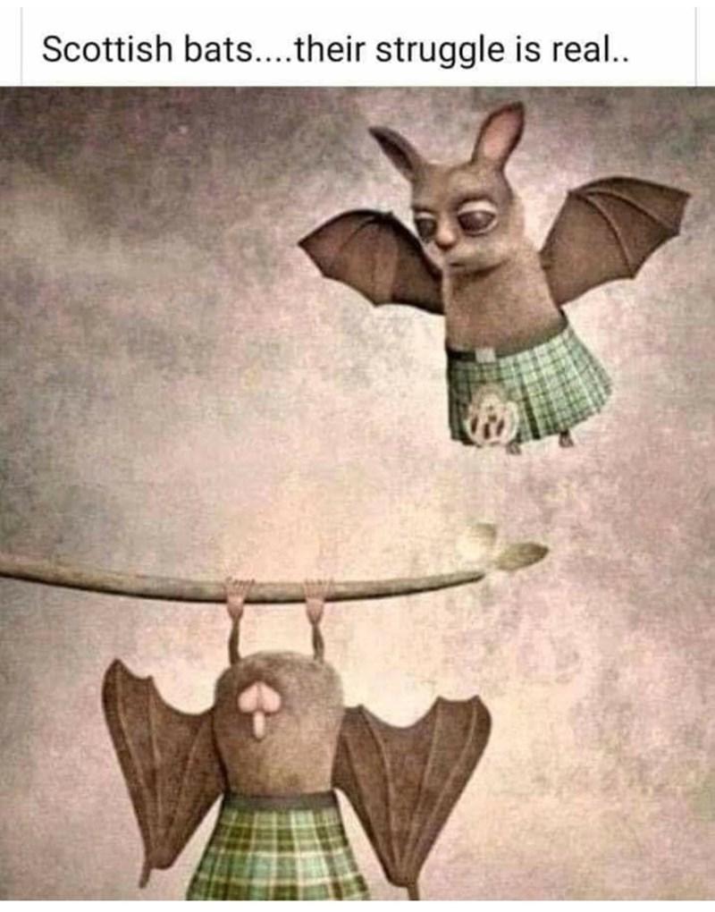 Bat - Scottish bats..their struggle is real..