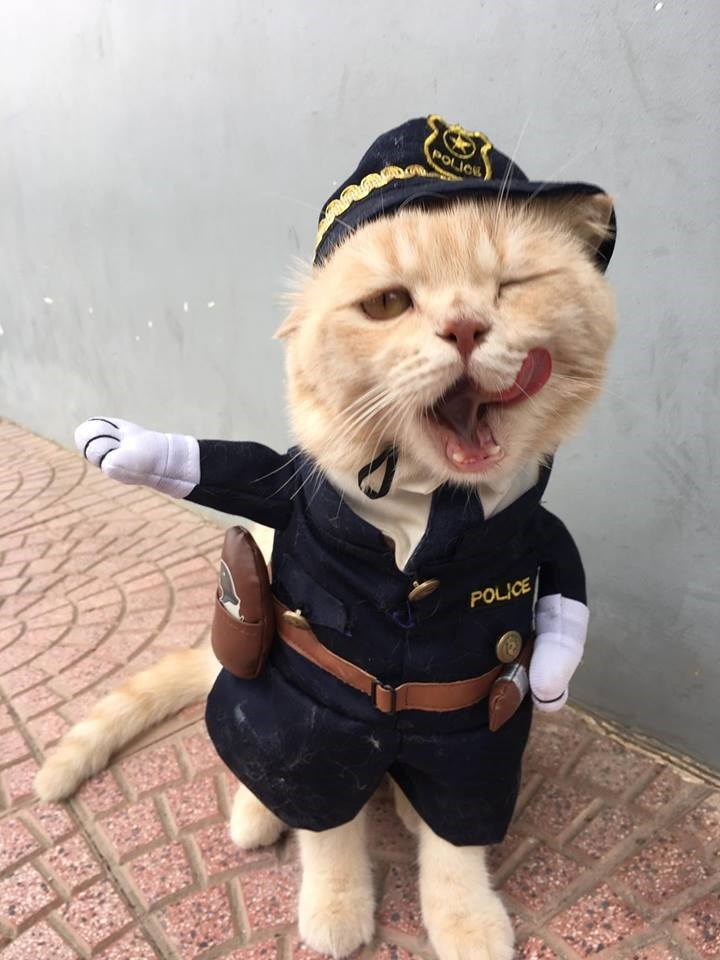 Cat - POLIC POLICE 園